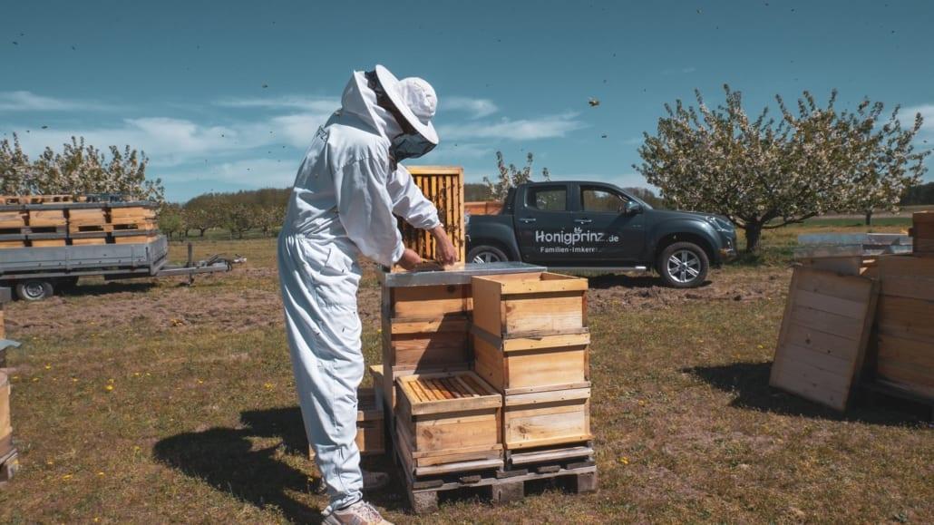 Honigernte